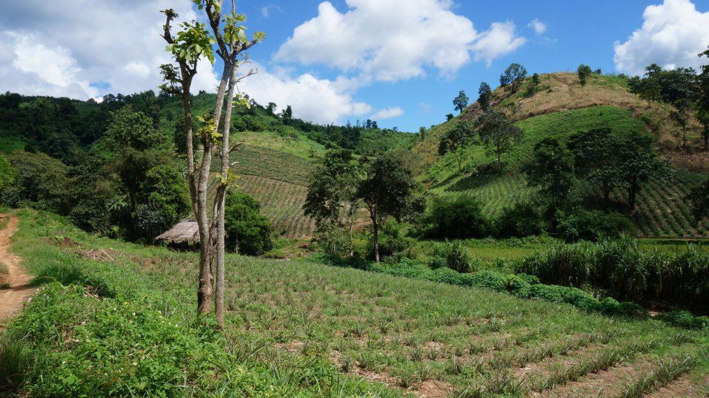 Trek Chiang Rai