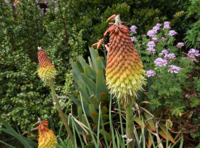 Botanic Garden Adélaïde