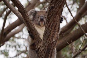 Les gentils animaux en Australie – Part1