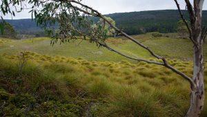Herbes vertes dans la montagne