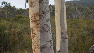 tronc d'arbre avec dessin naturel